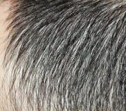 Hair Stock Photo