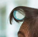 Hair Curler On Forehead Royalty Free Stock Photography