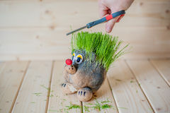 Hair cutting, hedgehog with needles of grass Stock Image