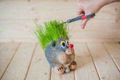 Hair cutting, hedgehog with needles of grass Royalty Free Stock Photo
