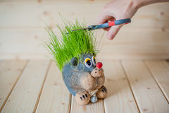 Hair cutting, hedgehog with needles of grass Stock Photos