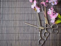 Hair cutting shears Stock Images