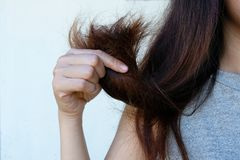 Hair Damage,Hair Damage, Health And Beauty Concept. stock image