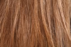 Hair detail Stock Image