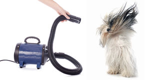 Hair dryer for dog. In front of white background Stock Photo