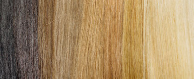 Hair extension palette with color samples from blonde to black Stock Photography