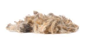 Hair heap. Photo of hair heap isolated on white royalty free stock images