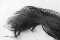 Hair. Isolated on white background Stock Image