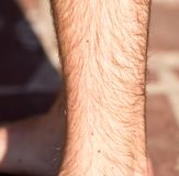 Hair on the legs of a man.  Royalty Free Stock Images