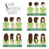 Hair length chart Royalty Free Stock Photography