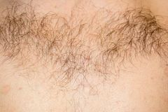 Hair on the male chest. Close-up. Horizontal photo Stock Photography