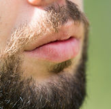 Hair of a man with a beard and mustache Stock Photos