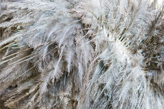 Hair Ostrich texture Royalty Free Stock Image