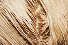 Hair in paint Royalty Free Stock Images