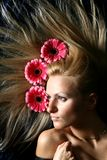 Hair pink flowers Stock Images