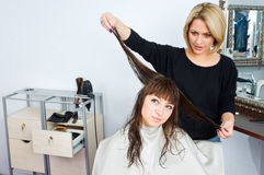 Hair stylist in work Stock Photography