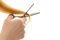 Hair tapering of split ends by scissors. Stock Photo