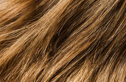 Free Hair Texture Royalty Free Stock Image - 11099426