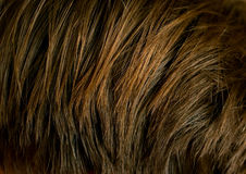 Hair texture. An abstract dark background. Shallow DOF Stock Image