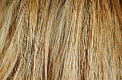 Hair texture. Hair blondie texture for background Stock Images