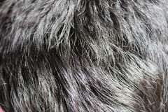 Hair Texture. It is a photo of my hair Royalty Free Stock Image