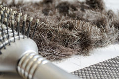 Hairbrush With Hair Stock Photography