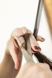 haircut Imagens de Stock