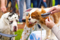 Haircut dogs professional master Royalty Free Stock Photos