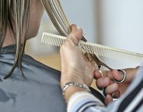 Haircut. Hands of beautician working on haircut Stock Image