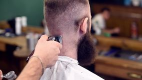Haircutting with clipper, shaking off hair with brush from back of head. Cropped close up of haircutting in barbershop. Professional hairdresser cutting hair stock video
