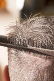 Hairdresser cuts hair Royalty Free Stock Images