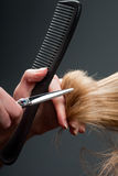 Hairdresser cutting hair Royalty Free Stock Photos