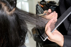 Hairdresser cutting the hair stock image