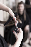 Hairdresser cutting hair Royalty Free Stock Photography