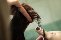 Hairdresser cutting hair Stock Image