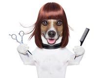 Hairdresser dog stock photography