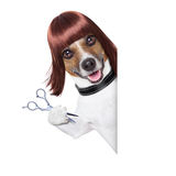 Hairdresser dog Stock Images