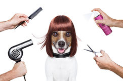 Hairdresser dog Royalty Free Stock Images