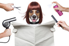 Hairdresser dog Stock Image
