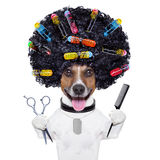 Hairdresser dog with curlers royalty free stock photography