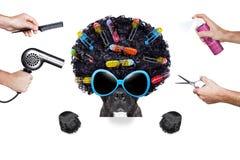 Hairdresser dog Royalty Free Stock Image