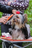 Hairdresser for dogs Stock Image