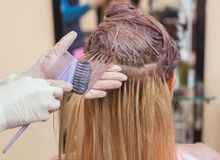 The hairdresser paints the woman`s hair in white, apply the paint to her hair. In the beauty salon royalty free stock image