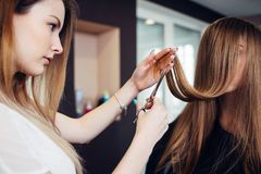 Hairdresser trimming the split ends of female customer sitting with long hair covering her face in beauty salon Royalty Free Stock Photography