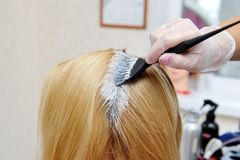 The hairdresser uses a brush to apply the dye to the hair, for d. Yeing Stock Images