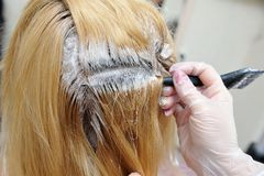 The hairdresser uses a brush to apply the dye to the hair, for d. Yeing Stock Photos