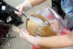 The hairdresser uses a brush to apply the dye to the hair, for d. Yeing Royalty Free Stock Images