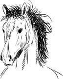 Haired horse head Royalty Free Stock Photos