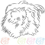 haired lång ragdoll för katt Royaltyfri Foto