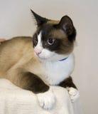 haired lycklig huskortslutning för katt Royaltyfria Bilder